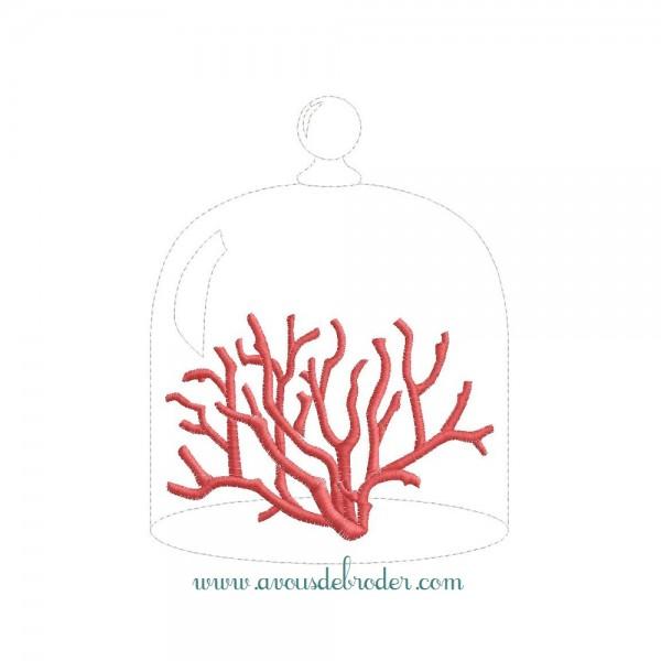 Corail sous cloche